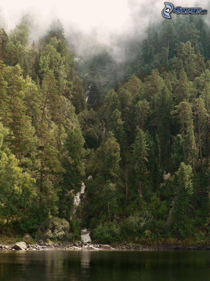 lake, coniferous forest, fog