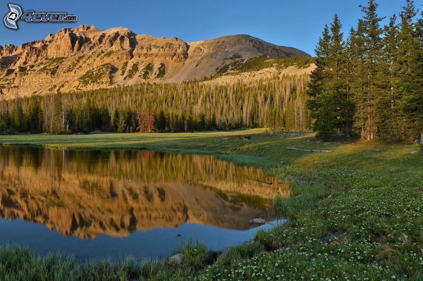 lake, coniferous forest, hill