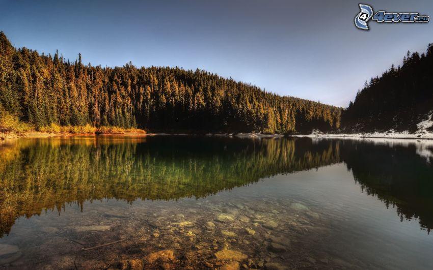 lake, coniferous forest, snow