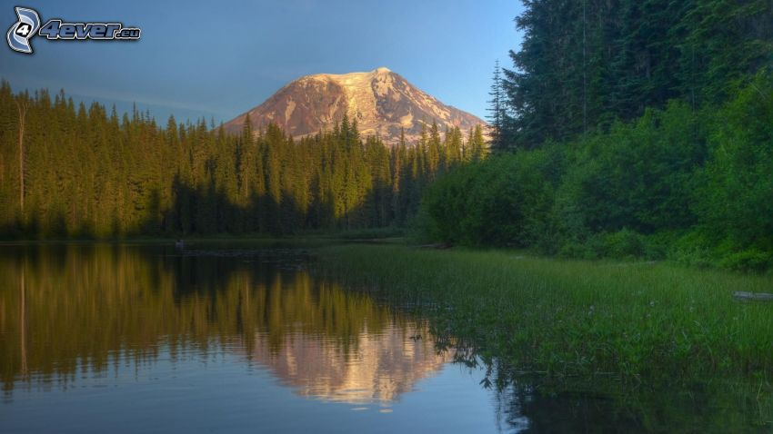 lake, coniferous forest, volcano