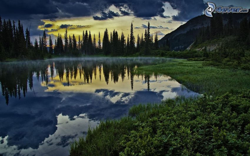 lake, coniferous trees, greenery, evening