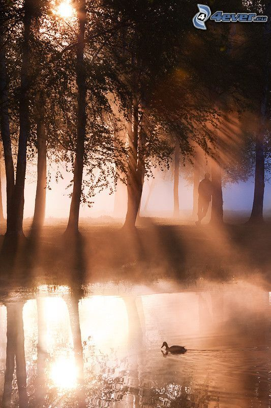 lake, forest, glow, duck, man
