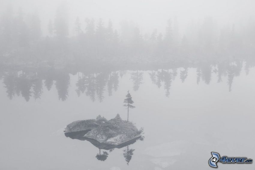 lake, island, coniferous trees, fog