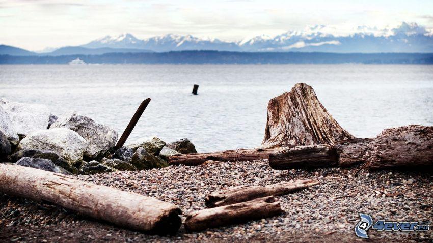 lake, logs