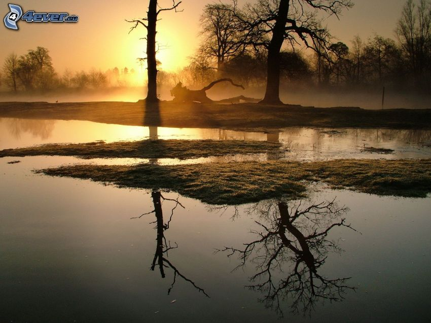 lake, silhouettes of the trees, sunset