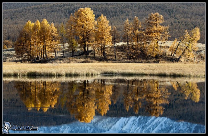 lake, yellow trees, reflection