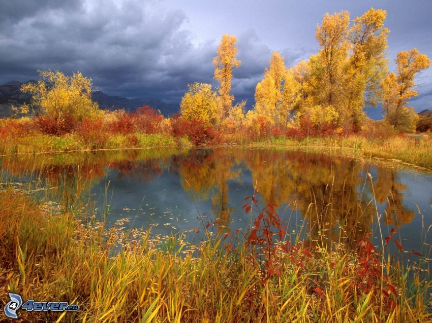 lake, yellow trees
