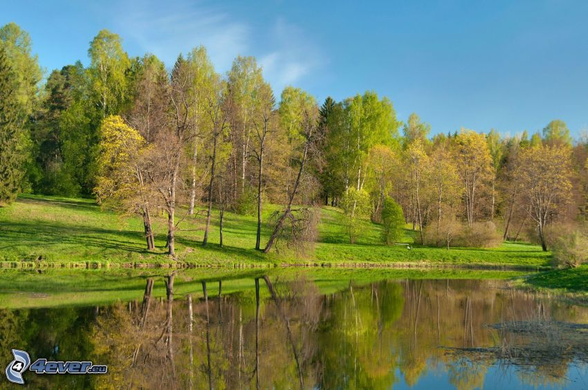 lake in the forest, greenery