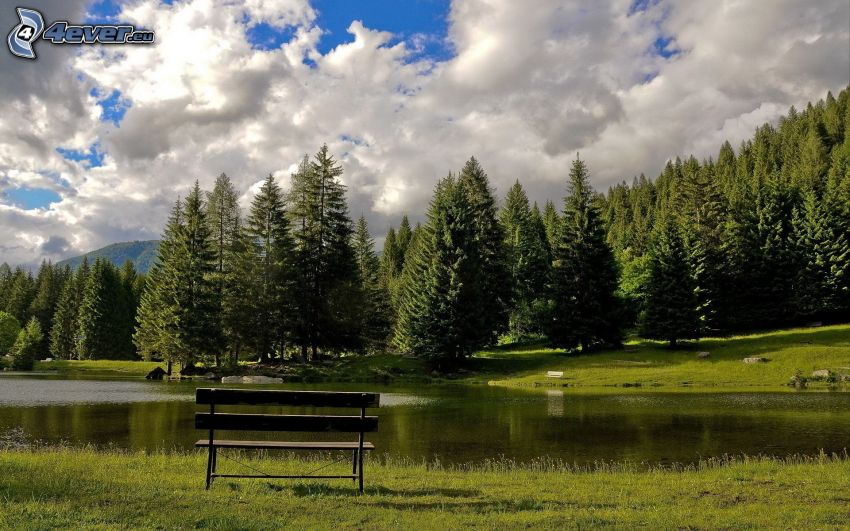 lake in woods, bench, clouds, coniferous forest