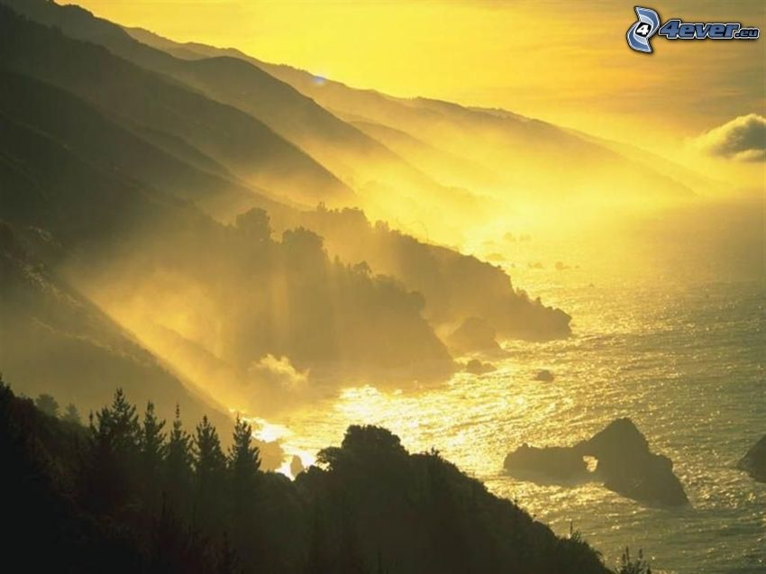 coast, fog, sea, forest, yellow