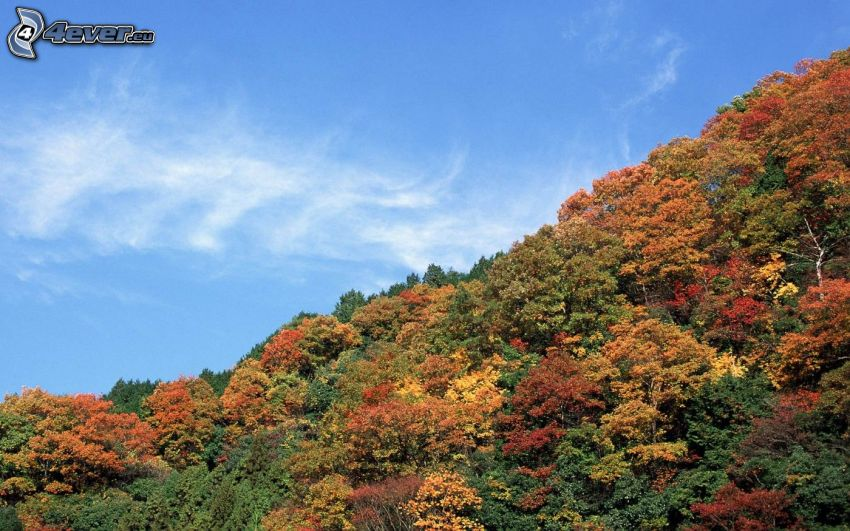 colorful autumn forest, hill, sky