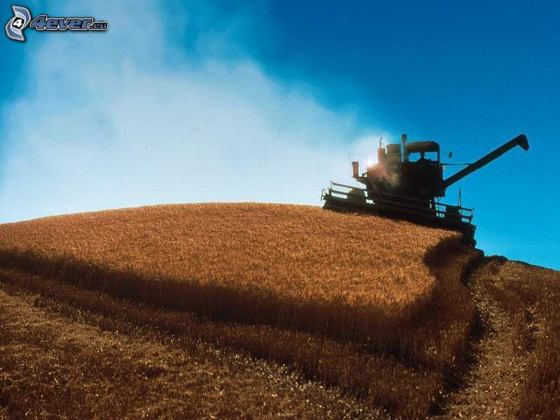 combine harvester, field, grain, sky