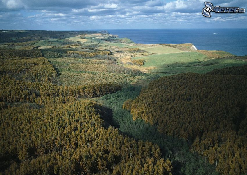 coniferous forest, coast, the view of the sea