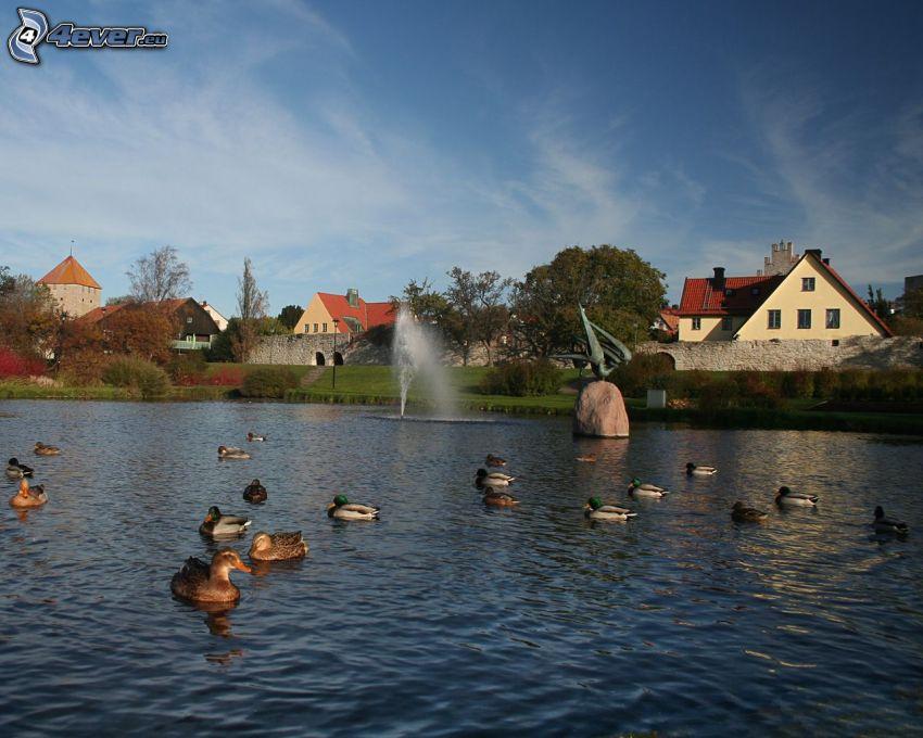 ducks, lake, water, fountain, village