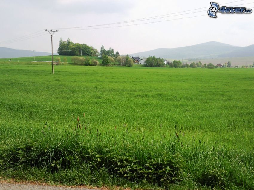 field, meadow, greenery