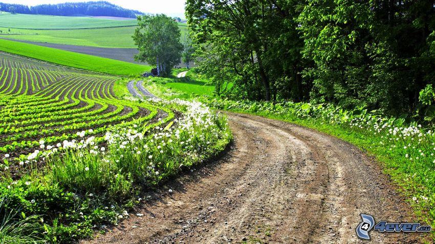 field path, field, grove