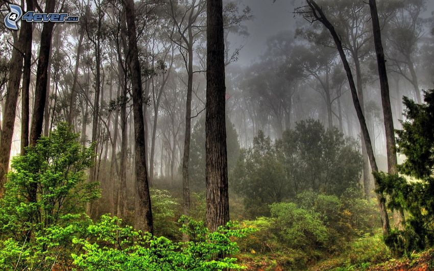fog in forest, HDR