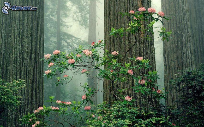 forest, flower, bush, shrub, huge trees, logs, fog