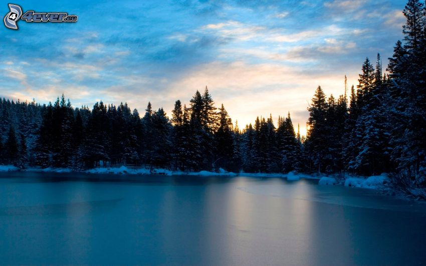 forest after sunset, frozen lake
