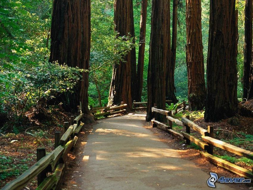 forest path, railing, sequoia, logs, forest