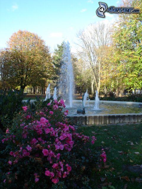 fountain, geyser, flowers, nature