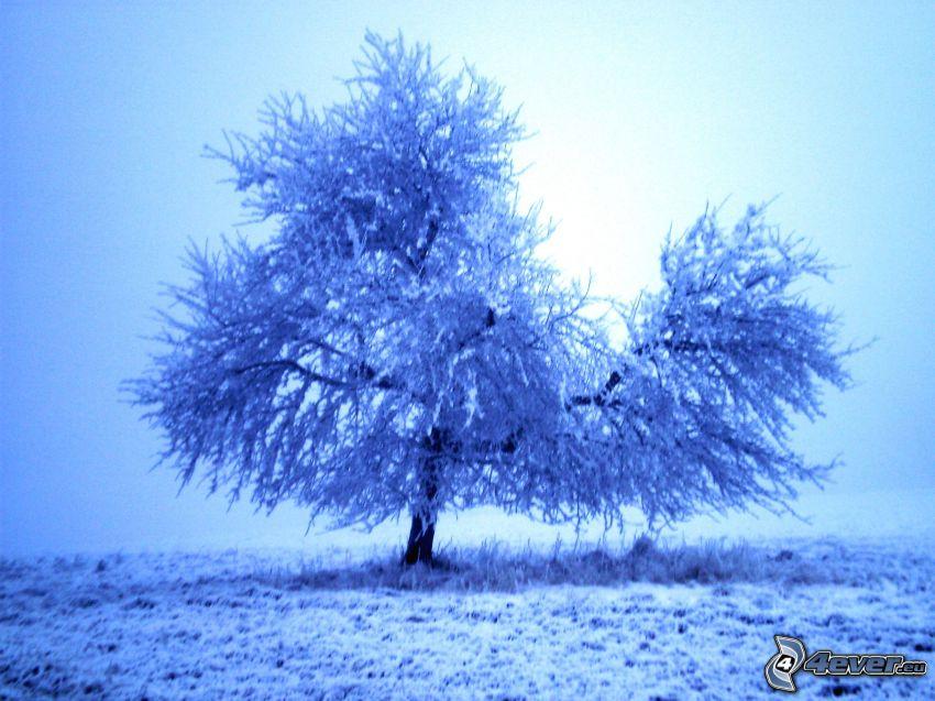 frozen tree, winter