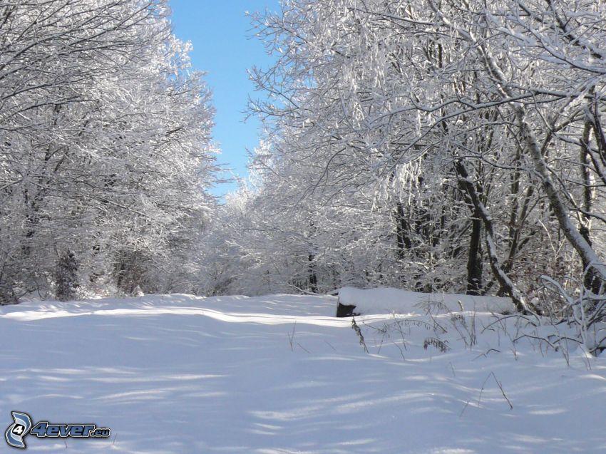 frozen trees, snow, winter
