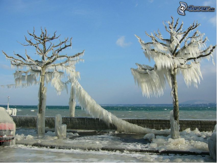 frozen trees, waterfront, winter
