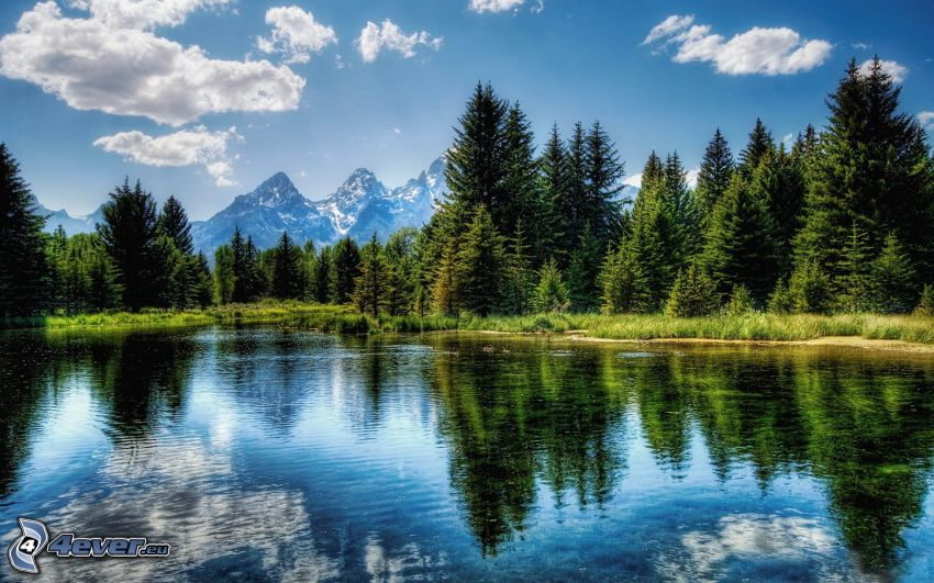 Grand Tetons National Park, River, coniferous forest, mountains