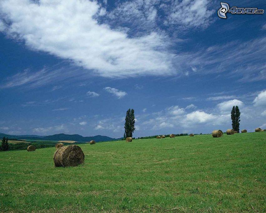 hay after harvest, meadow, poplars