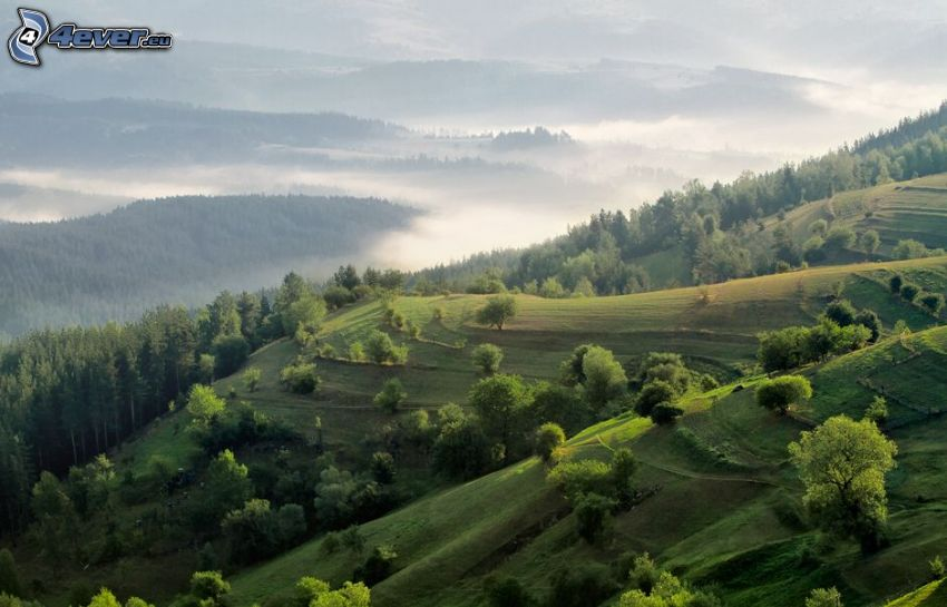 hills, green trees, ground fog