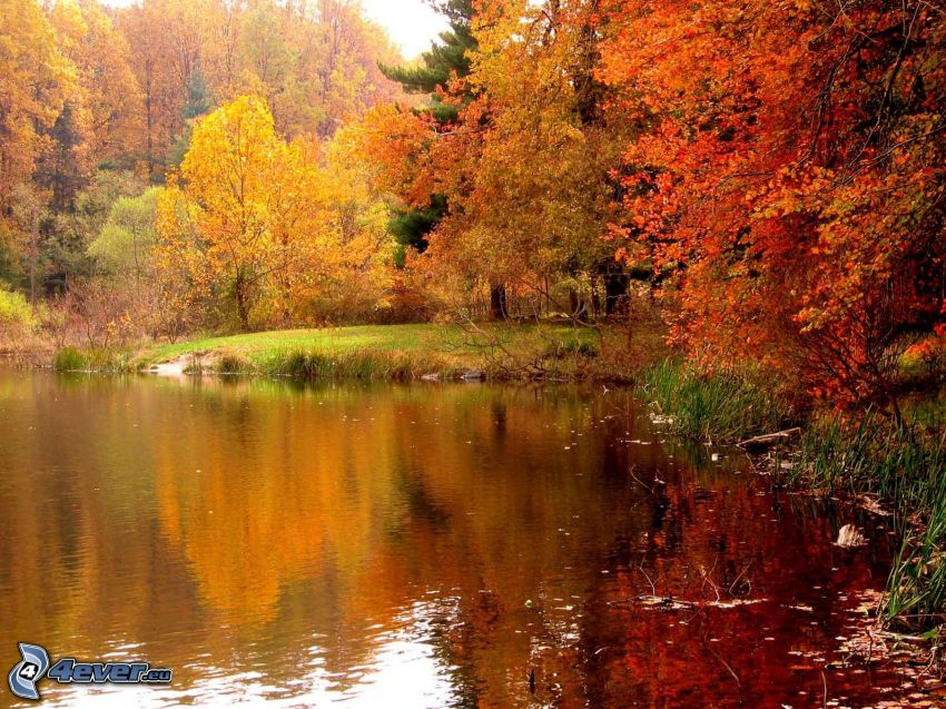 lake in the forest, autumn forest, colorful leaves