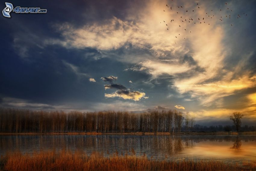 lake in the forest, dark sky, flock of birds
