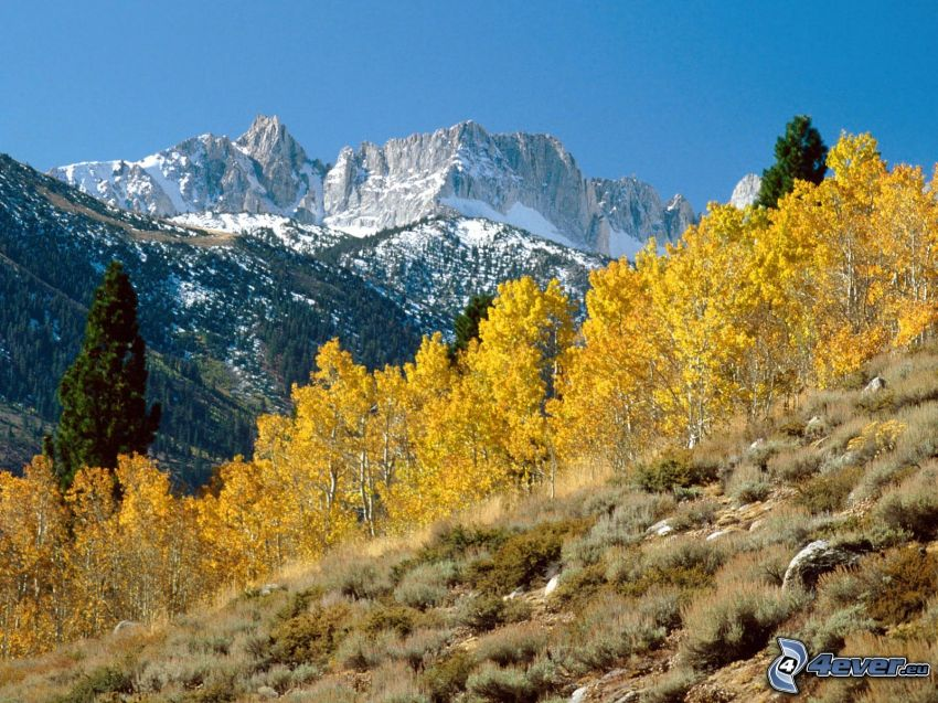 Matterhorn Peak, California, mountains, yellow trees