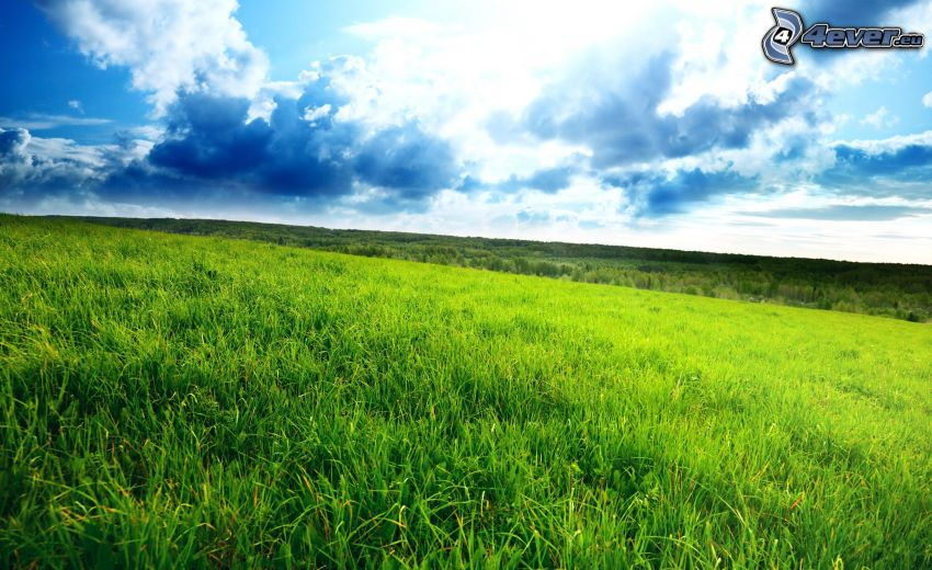 meadow, grass, clouds