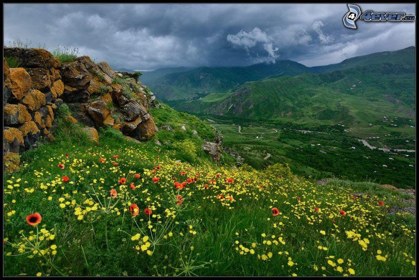 meadow, papaver rhoeas, dandelion, rocks, hills, clouds