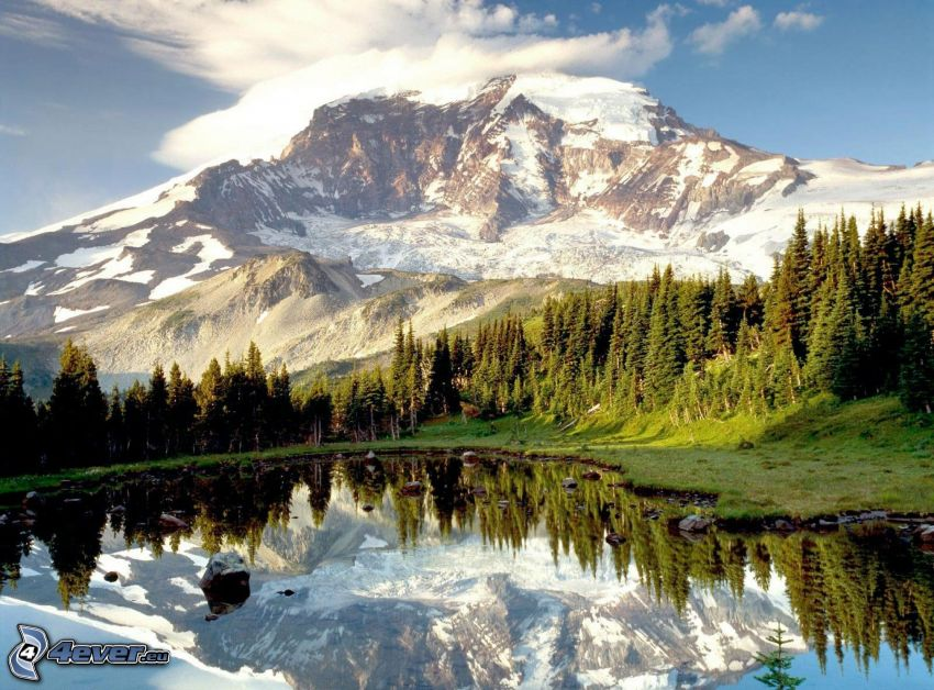 Mount Rainier, lake in the forest, hill, reflection