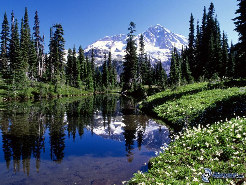 Mount Rainier, snowy mountain above the lake, mountain lake, coniferous trees, reflection