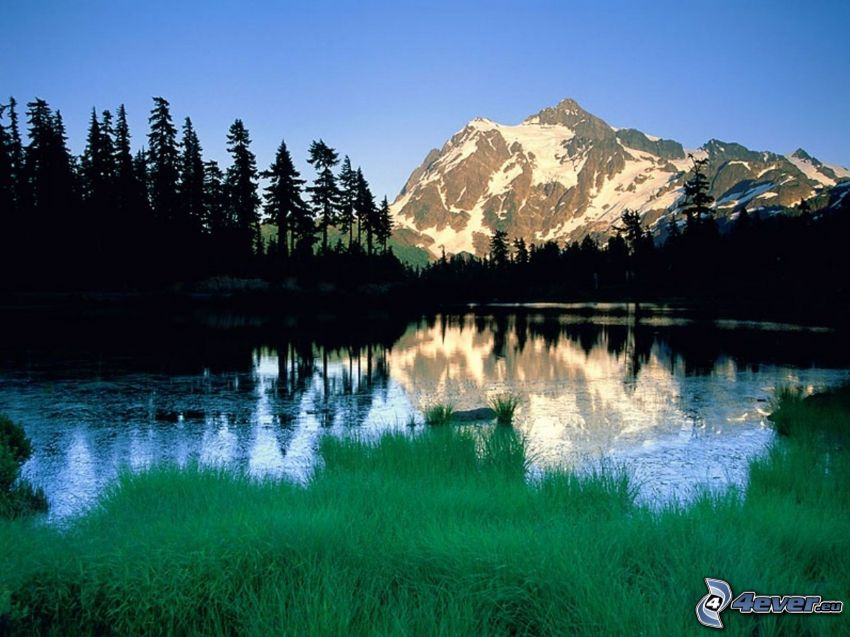 Mount Shuksan, snowy mountain above the lake, hill, coniferous trees, silhouettes of the trees, green grass