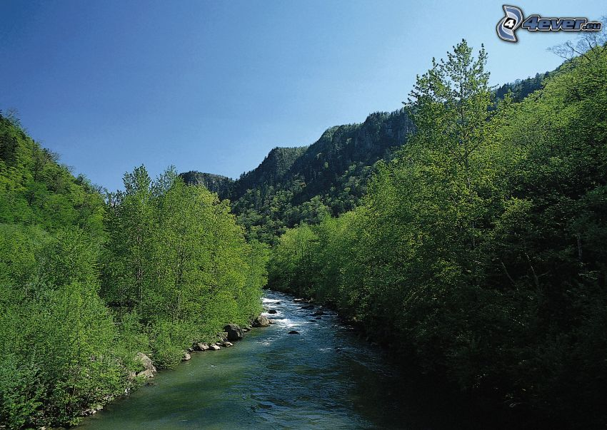 mountain stream, River, forest, green trees, creek in forest
