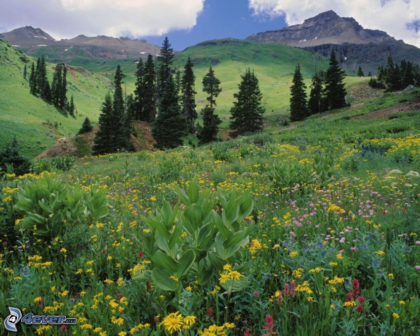 mountains, meadow, trees