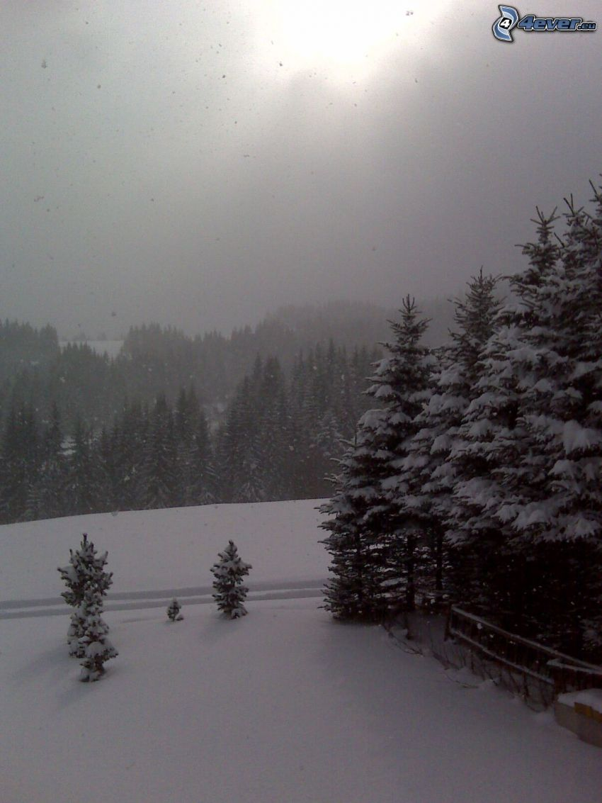 Orava, snow, mountain