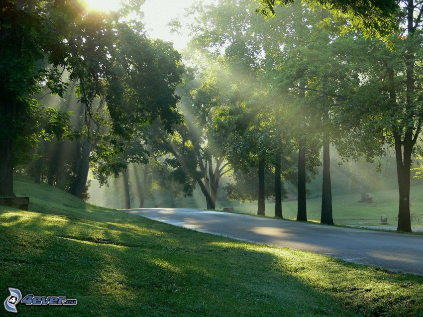 park, sidewalk, trees, green grass, sunbeams