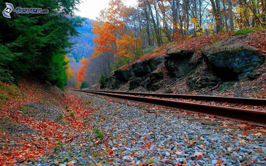 rail, colorful autumn forest, railway, red leaves, rocks