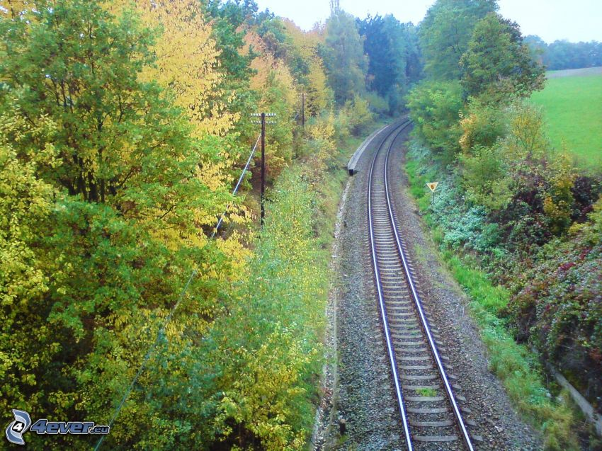 railway, autumn, rails