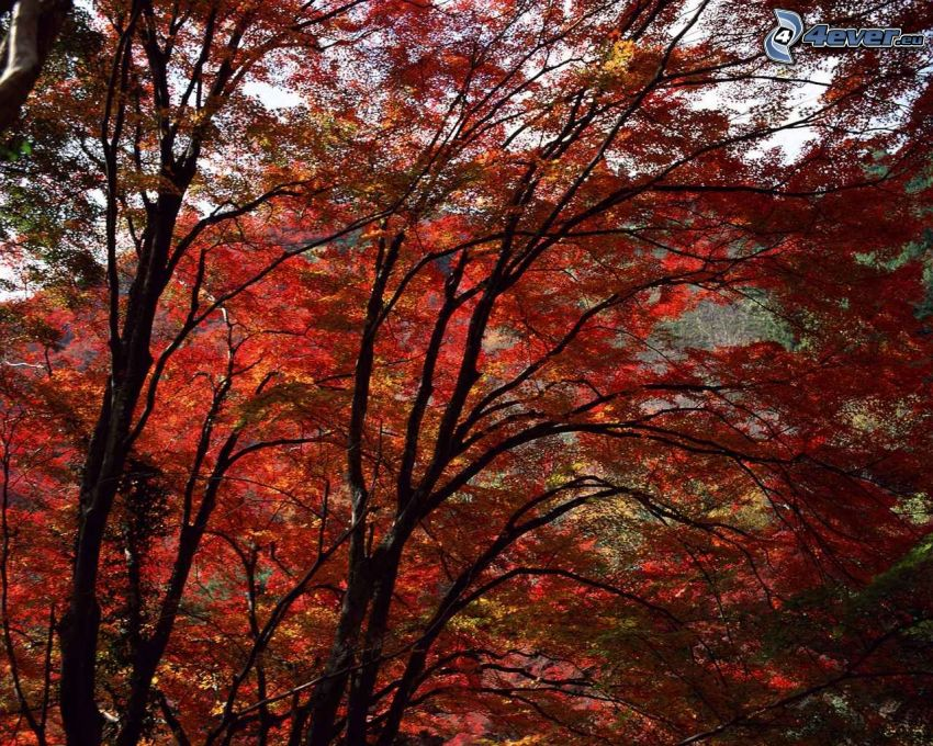 red autumn woods, leaves, trees, branches