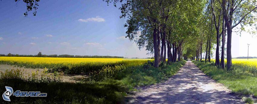 road, field, rapeseed