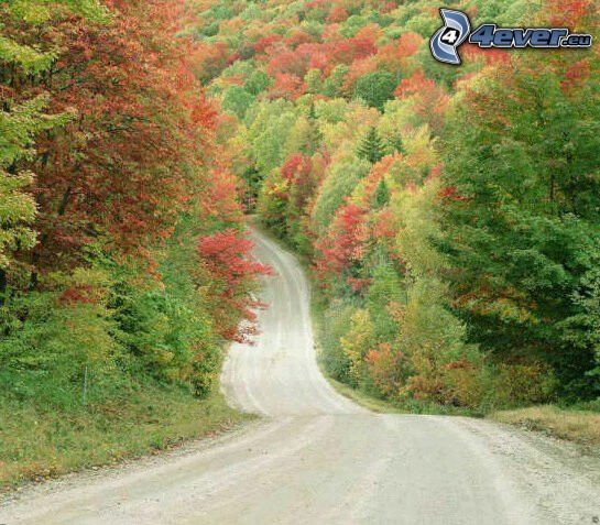 road through forest, colorful autumn forest, colour trees