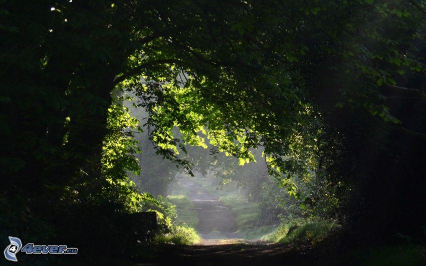 road through forest, dark forest, trees