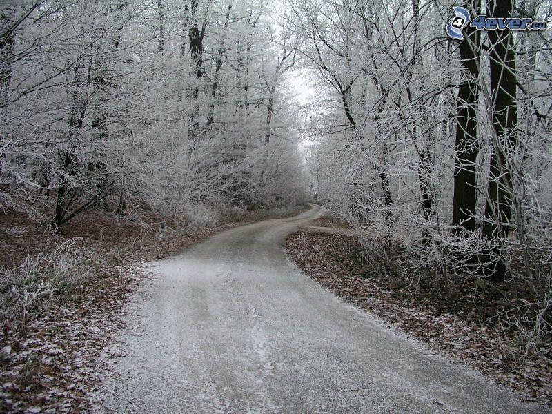 road through forest, frozen forest, winter